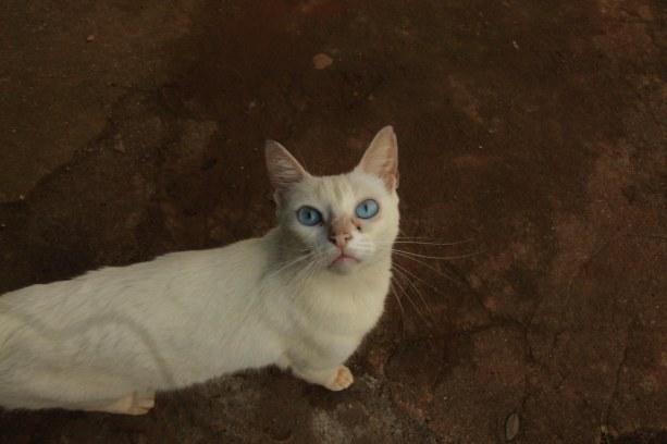 São 240 gatos abandonados na aldeia. (Foto: Laura Baiè)